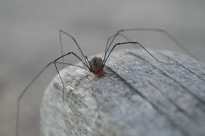 spider-1100173_1920