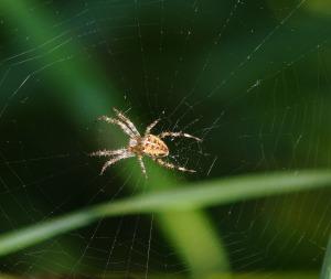 spider-429214_1920