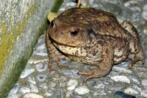 toad-405121_1920