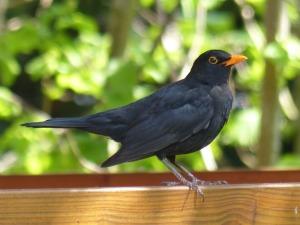 bird-1088107_1920