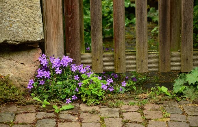 garden-1433059_1920