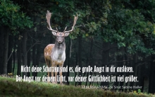 0 fallow-deer-984573_1920
