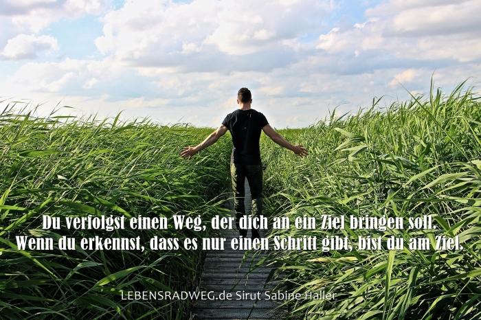 0 high-grass-1504280_1920