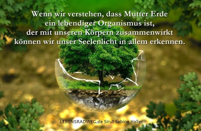 0-environmental-protection-326923_1280-1